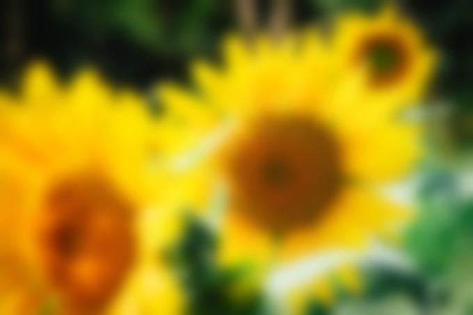 franchiseur carrément fleurs